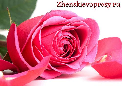 Чтобы розы дольше стояли что добавить