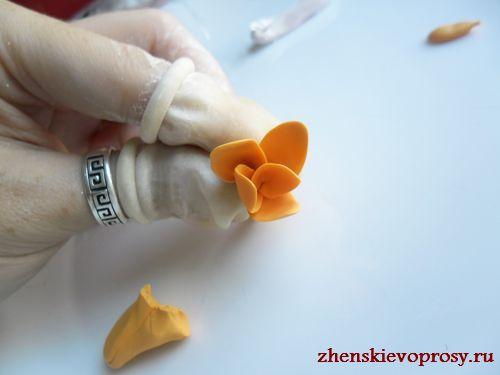 расположить лепестки вокруг чашелистника
