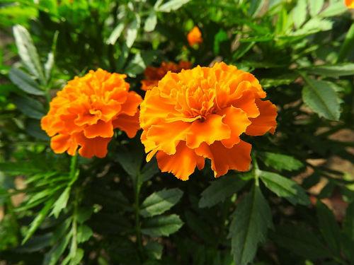 flower-948865_640