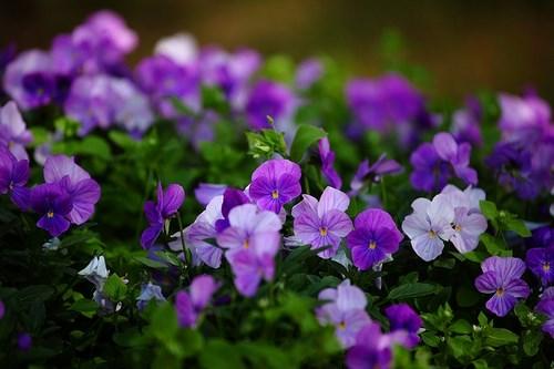 flowers-1492757_640