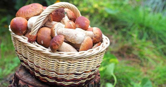 Почему опасно употреблять в пищу грибы собранные возле шоссу
