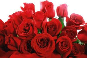 розы - цветы на 8 марта для начальницы