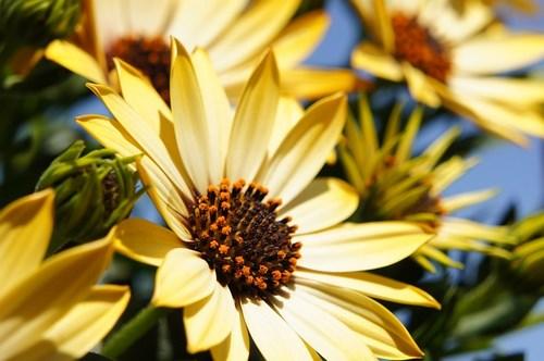 flower-108685_640