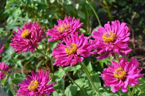 flower-110692_640