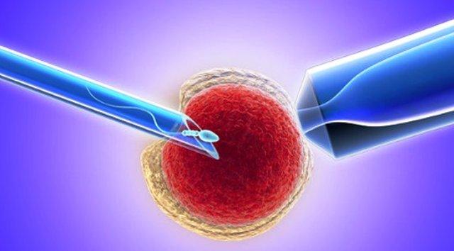 мужская и женская клетка