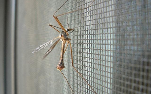 комар на сетке